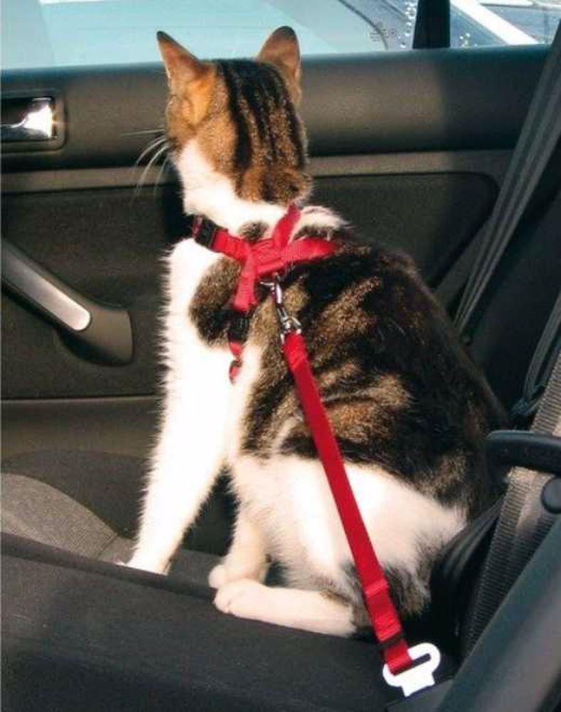 Postroj pro kočku do auta Trixie 20-50 cm