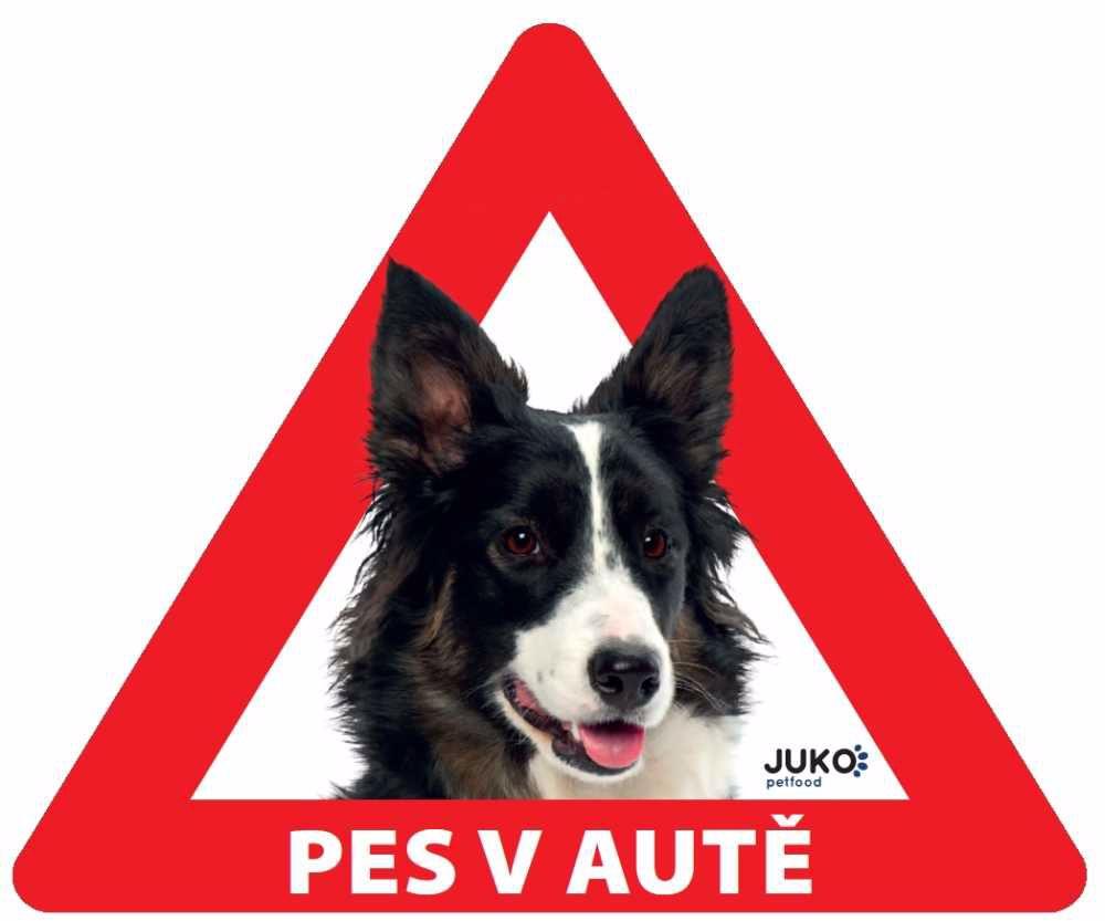 Samolepka pes v autě vnitřní - border kolie