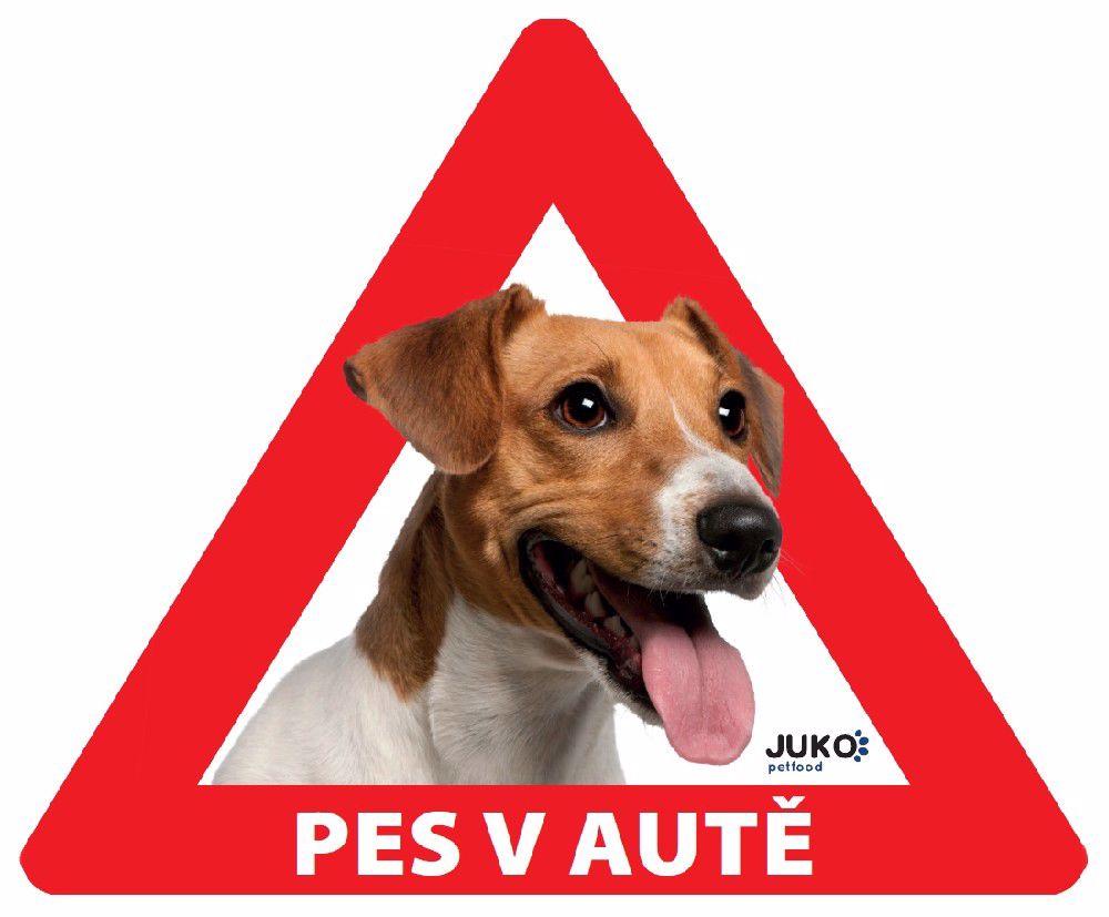 samolepka-Pes v autě venkovní- JACK RUSSEL TERIÉR-13900