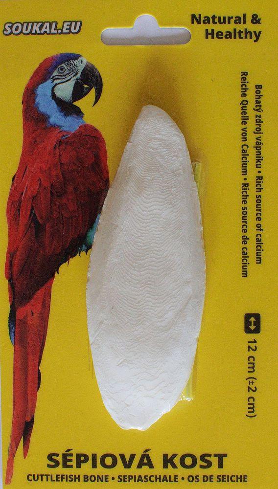 Sépiová kost na kartě cca 12 cm