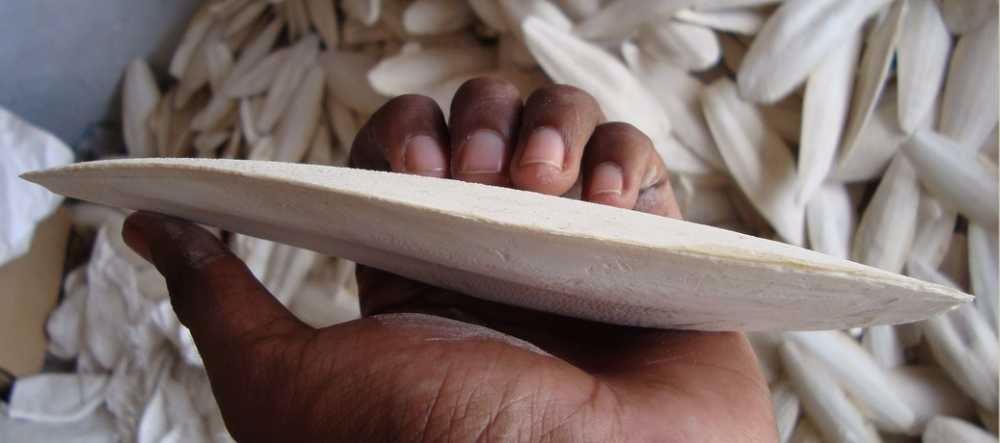 Sépiová kost velká cca 15 cm (15 ks)