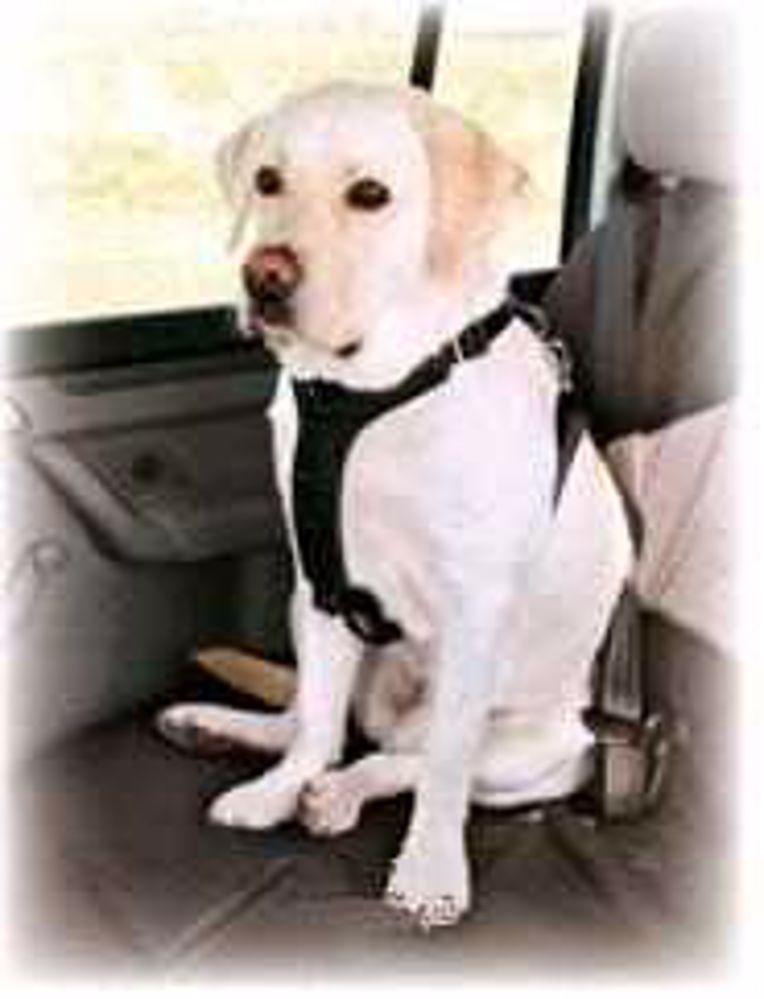 Bezpečnostní postroj auto Trixie  L-70-90cm-4045
